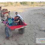 Camel Cart Ride