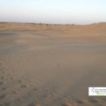 Camel footprints on Sand