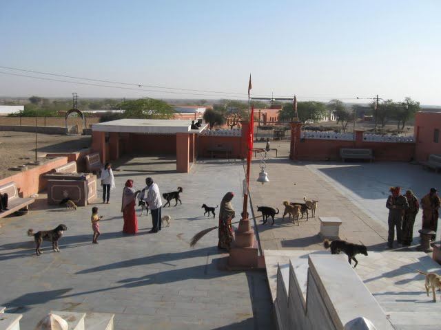Dogs at Bharion Temple