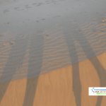 Shadow of Camel's Leg on sand