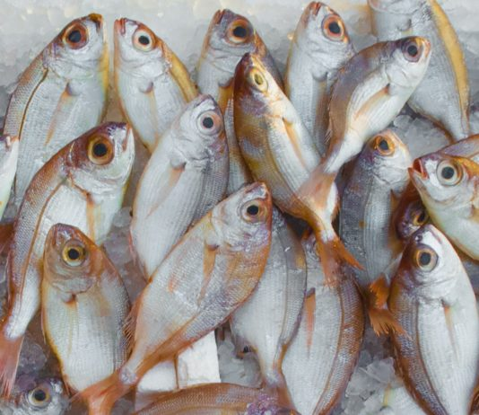 tips to buy good fish