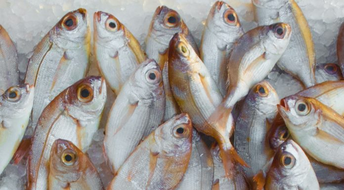 tips to buy good fish